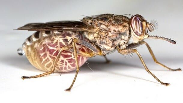 insetos-mais-aterrorizantes-natureza_17