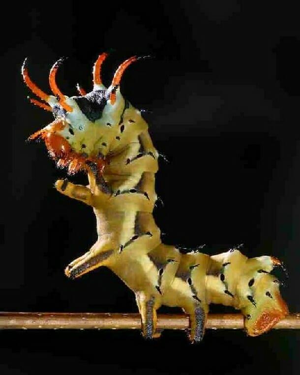 insetos-mais-aterrorizantes-natureza_2