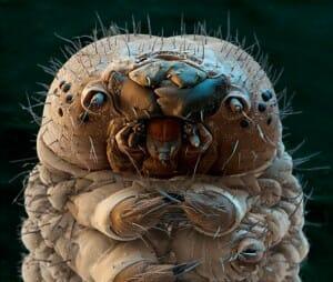 insetos-mais-aterrorizantes-natureza_20