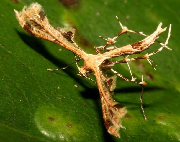 insetos-mais-aterrorizantes-natureza_22