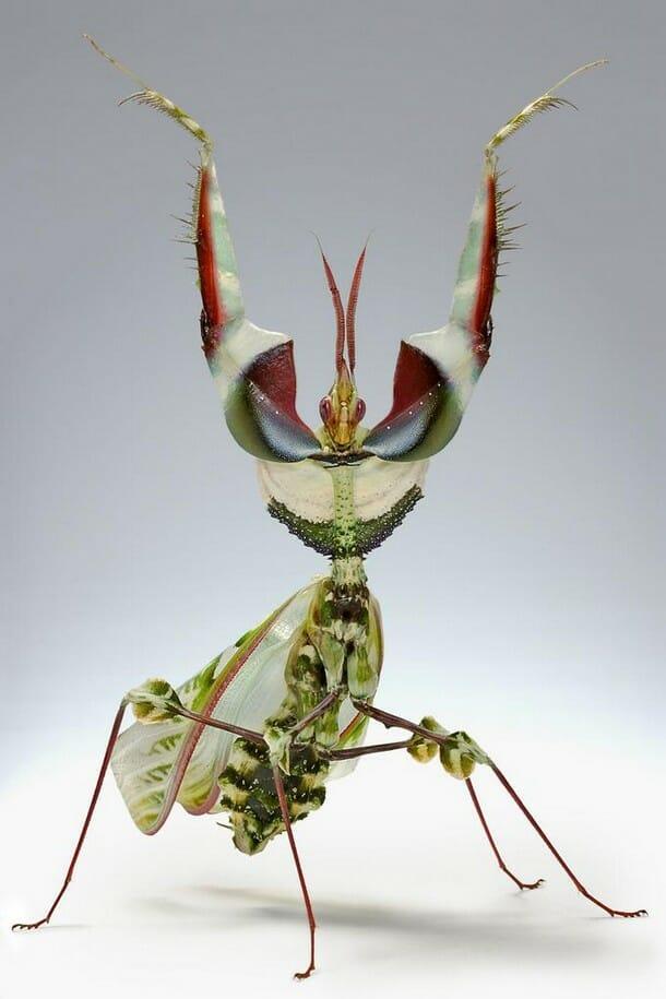insetos-mais-aterrorizantes-natureza_23