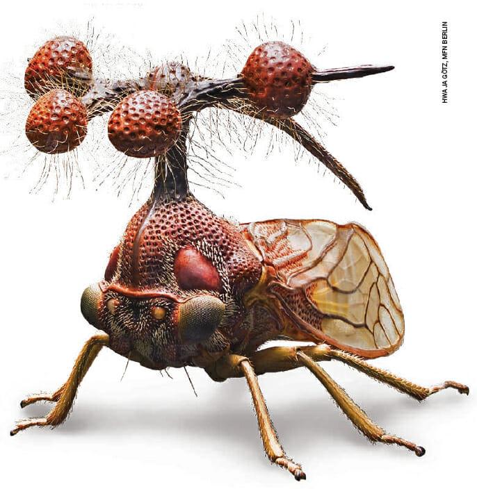 insetos-mais-aterrorizantes-natureza_24