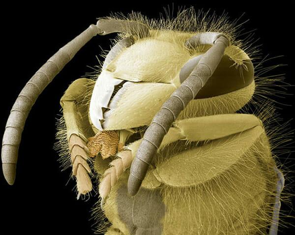 monstros-microscopios_13-vespa