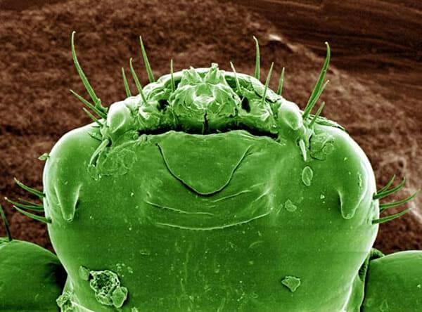 monstros-microscopios_3-chato