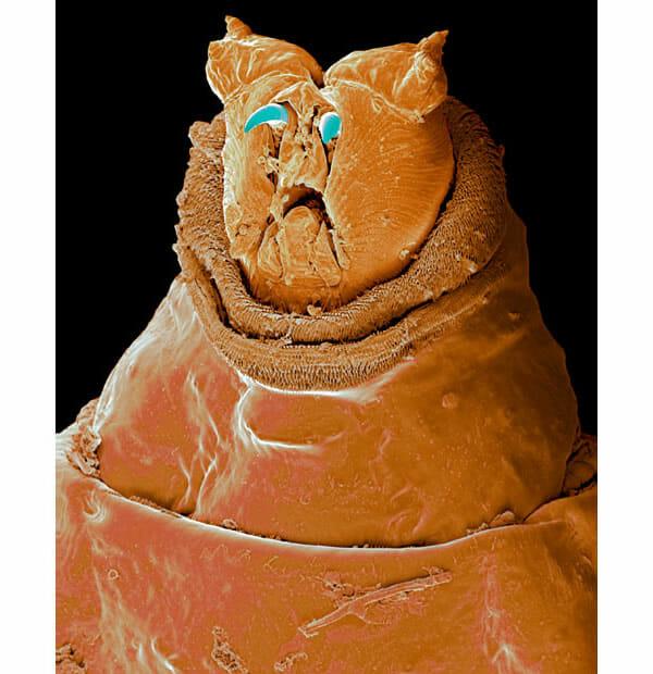monstros-microscopios_4-cabeca-larva