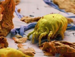 monstros-microscopios_7-acaro2