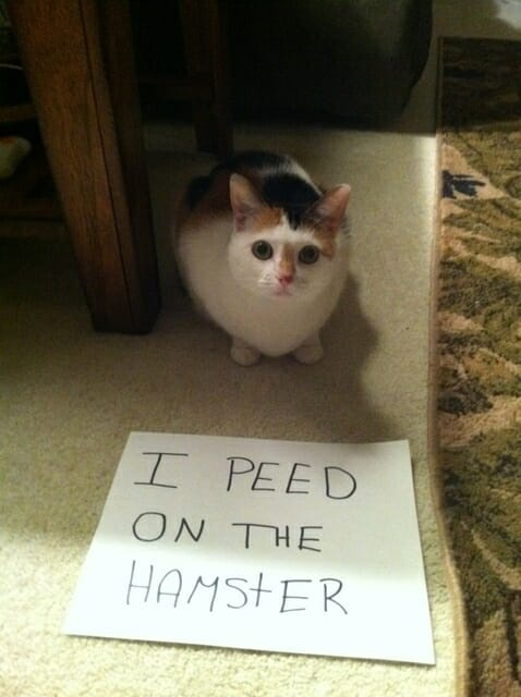 23 fatos que comprovam que quem manda é o seu gato e não você