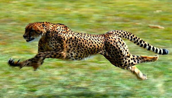 animais-mais-exoticos_6