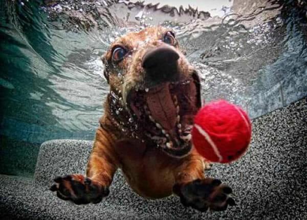 25 Fotos sensacionais de cães debaixo d'água