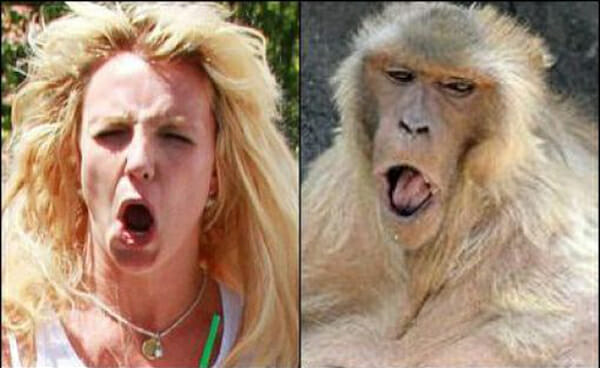 Cara de um focinho de outro: Brincadeira compara 25 celebridades com animais