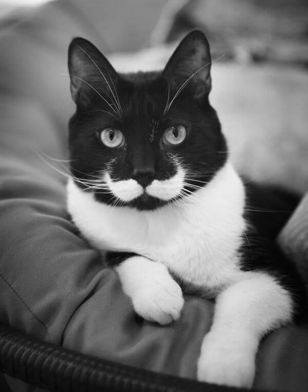 10 Gatos que ficaram famosos na internet graças às marcas engraçadas em seus pelos