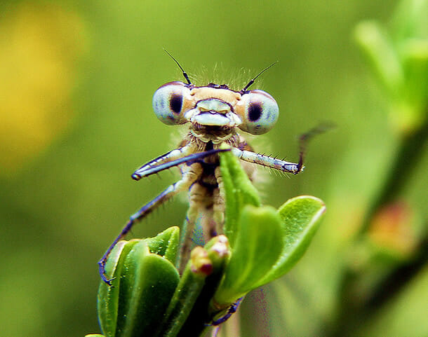 insetos-alienigenas-aliens_1