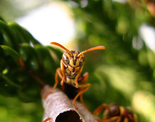insetos-alienigenas-aliens_11