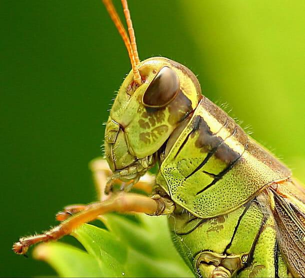 insetos-alienigenas-aliens_12