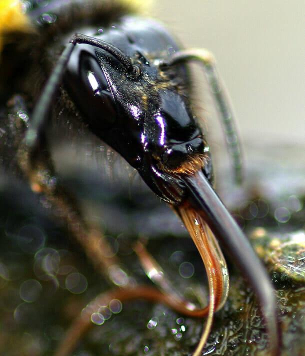 insetos-alienigenas-aliens_3