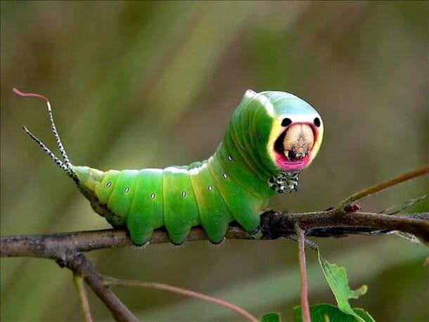 insetos-alienigenas-aliens_4