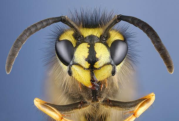 insetos-alienigenas-aliens_6