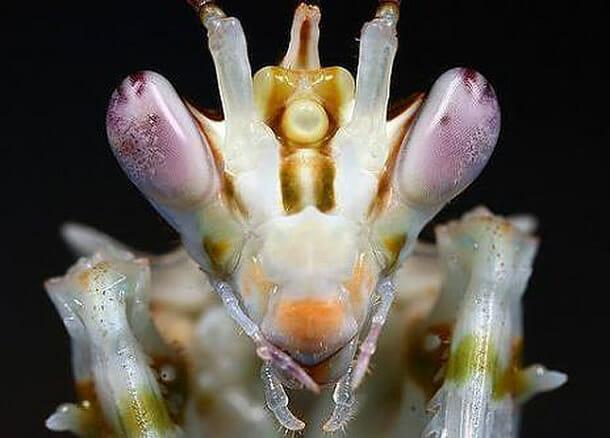 insetos-alienigenas-aliens_7