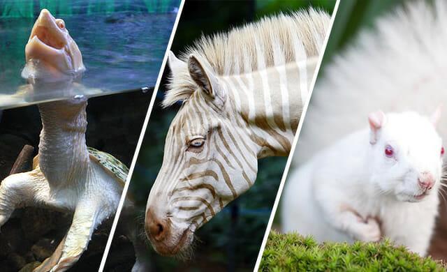 animais-albinos
