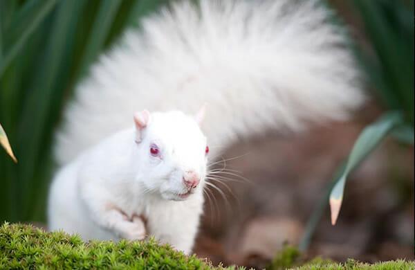 animais-albinos_3-esquilo