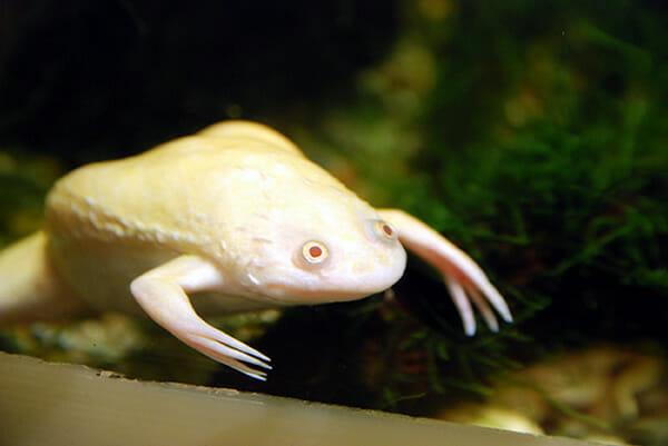 animais-albinos_8-ra