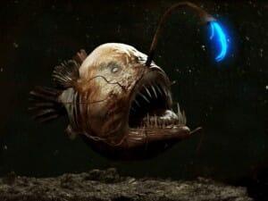 criaturas-mais-feias-e-bizarras_lophiiformes_1