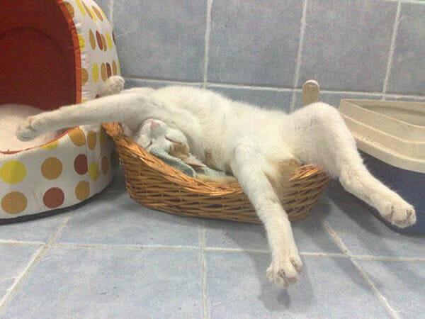 30 Gatos que dominam a arte de dormir