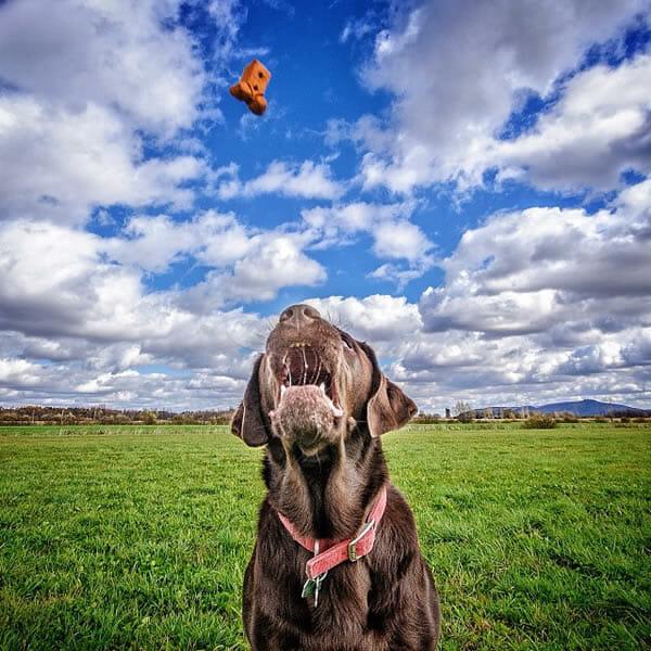 25 Fotos legais de cães pegando objetos