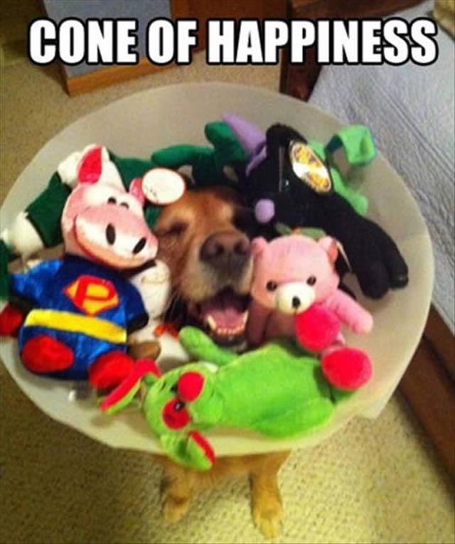Dog Toys Cones Food Prepare