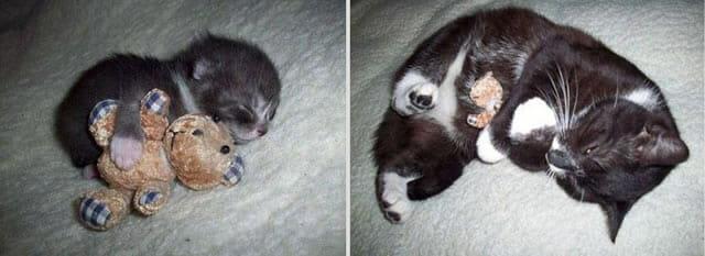 22 Fotos adoráveis mostram o antes e depois de animais