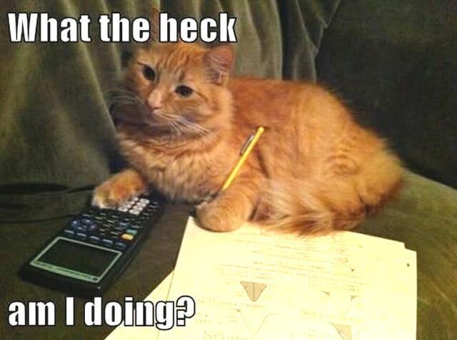 27 Imagens que provam que gatos também podem ser geeks