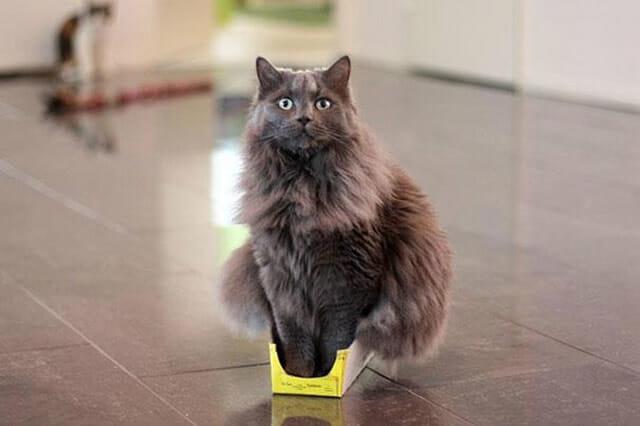 21 Gatos que pensam que são menores do que realmente são