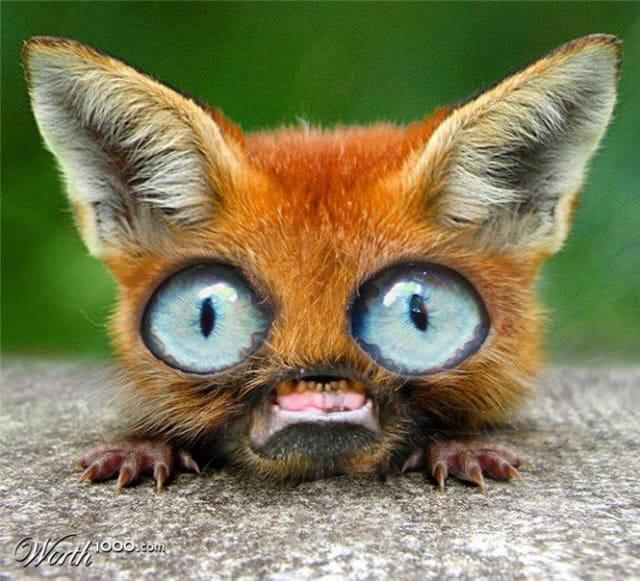 Muito 24 Misturas engraçadas de animais feitas no Photoshop | ROCK'N TECH TL57