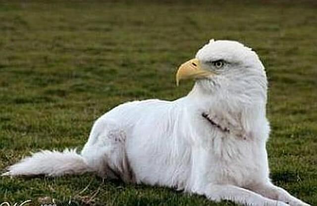 24 Misturas engraçadas de animais feitas no Photoshop