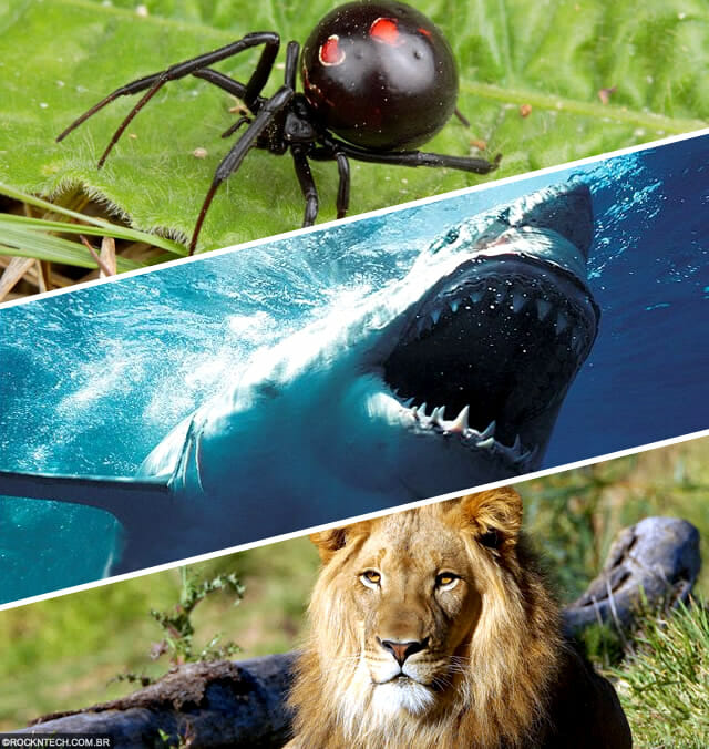 top-animais-mais-matam-humanos