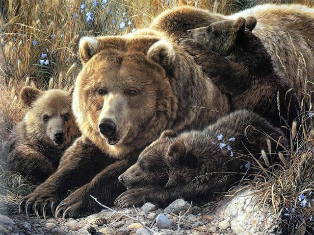 top-animais-mais-matam-humanos_21-ursos