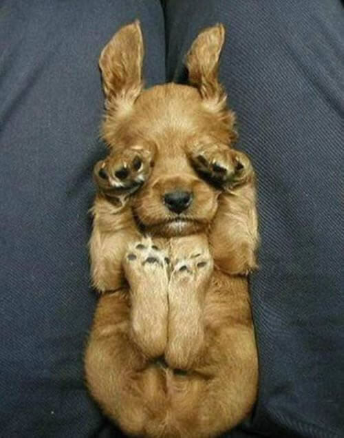 25 Imagens de cães que representam como você está se sentindo nesta segunda-feira