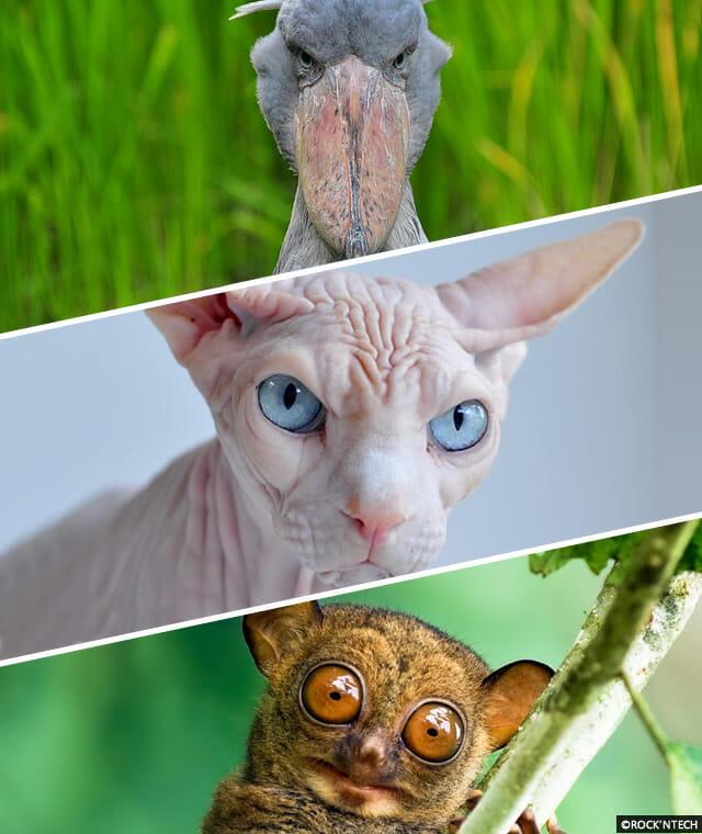 animais-incomuns
