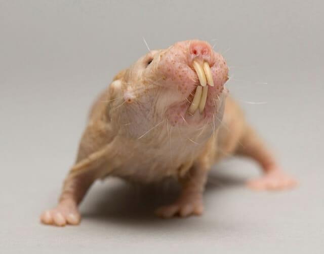 os animais mais exóticos e estranhos do planeta must do