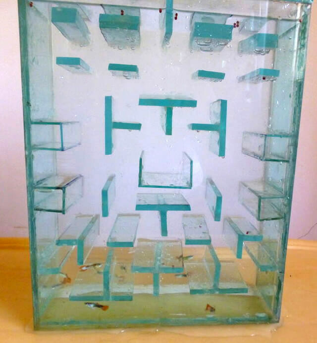 aquario-pac-man_1