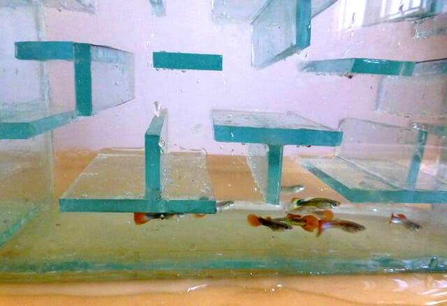 aquario-pac-man_2