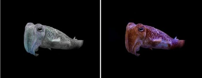 10 Imagens colocadas lado a lado mostram como os animais enxergam o mundo diferente de nós