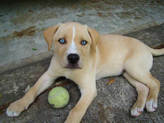 23 Cães super fofos que resultaram de cruzamentos inesperados
