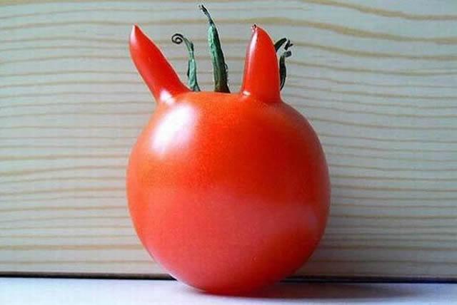15 Frutas e legumes que se esqueceram de ser frutas e legumes