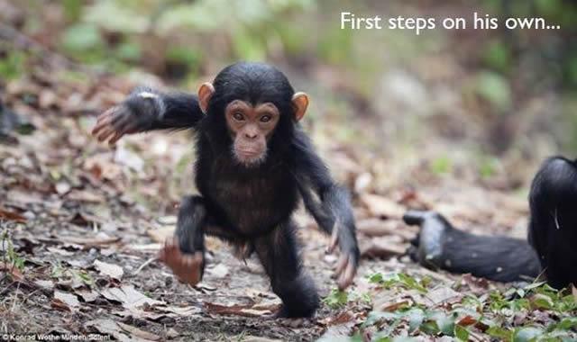 22 Fotos fofas mostram a primeira vez de animais em diversas situações