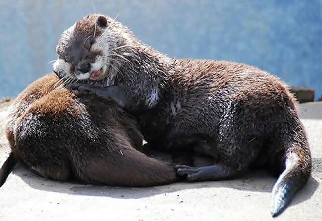 25 Imagens fofas de animais que usam seus amigos como travesseiros