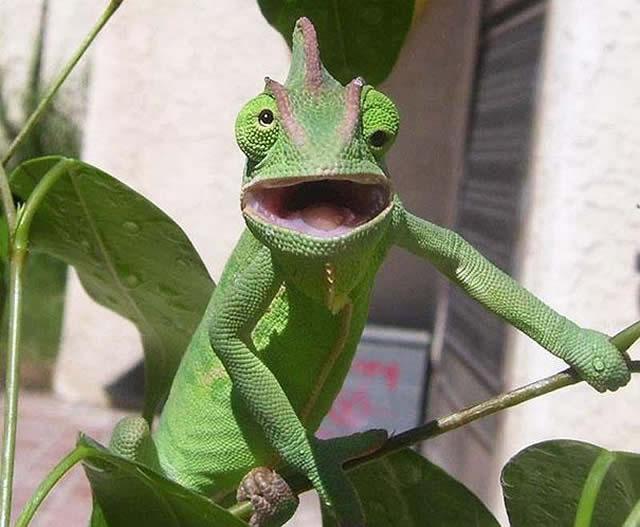 23 Fotos engraçadas de animais fazendo caretas