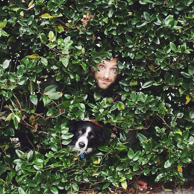 39 Imagens e um desafio: Encontre o cachorro!