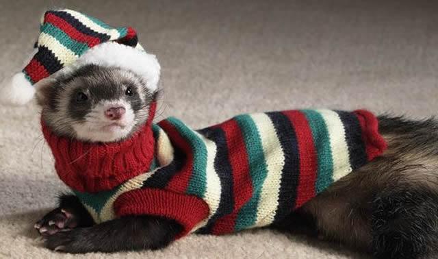 21 Animais que estão muito mais preparados para o frio do que você