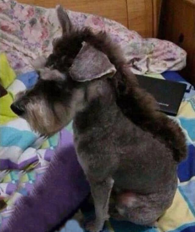 """22 Cães com """"cortes de cabelo"""" super engraçados"""
